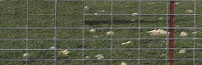 Okbrandwire 0489 0 Sheep And Goat Fence 330 Ft Roll L 12 5 Ga T 4 X 4 X 48in Mesh