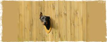 How To Dog Proof Your Property 3 Great Tips Wag The Dog Uk