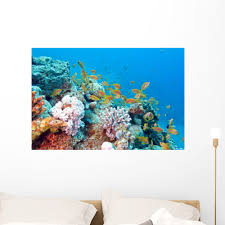 Coral Reef With Shoal Wall Mural Decal Sticker Wallmonkeys Peel Stick Vinyl Graphic 36 In W X 24 In H Walmart Com