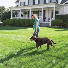 Top 5 Best Wireless Dog Fences In 2020