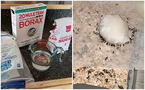 3 ing ant recipe crafty