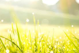 Bezplatný obrázek: ráno, Rosa, tráva, louka, rostlina, obloha ...