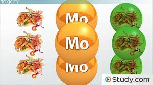 molybdenum deficiency toxicity
