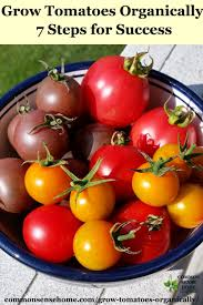 how to grow tomatoes organically 7