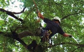 Tree Service, Tree Removal, Tree Trimming, Cleveland OH