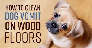 how to clean dog vomit on wood floors
