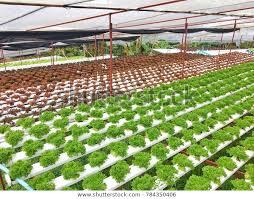 indoor hydroponic garden growing plants
