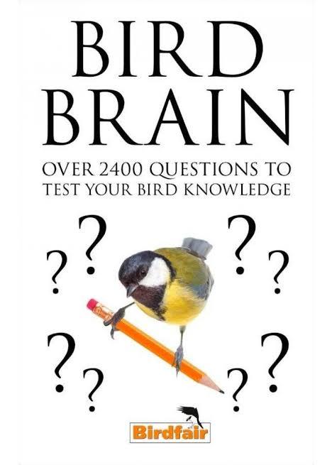 "Image result for bird brain"""