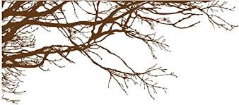 Amazon Com Stickerbrand Nature Vinyl Wall Art Tree Top Branches Wall Decal Sticker Brown 53 X 120 Left To Right Easy To Apply Removable