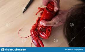 Man Holding A Boiled Lobster On Hands ...
