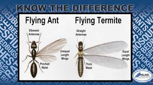38+ Ant Vs Termite Wings Images