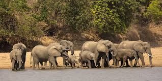 Online Tool Speeds Response to Elephant Poaching by Tracing Ivory to Source  – Africa Security News Wire