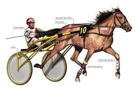 sports et jeux > sports équestres > course de chevaux : course ...