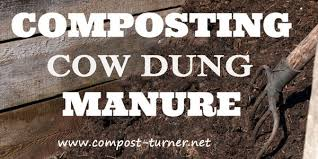 cow dung manure posting