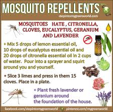 All Natural Insect Repellant