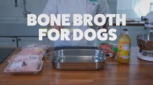 bone broth for dogs easy homemade