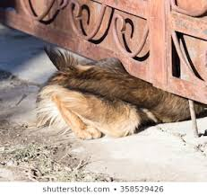 Crawling Under A Fence Images Stock Photos Vectors Shutterstock