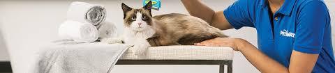 pet services faq requirements tips