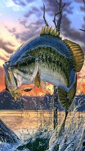 50 b fish wallpaper for iphone on