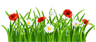 Poppies and Daisies with Grass PNG Clipart Picture | Gallery ...