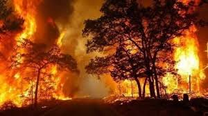 Un incendio al giorno nel 2019. Tutta colpa del caldo e della ...