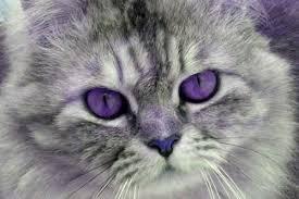 purple e cat a preposterous myth