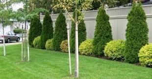 Pin By Stephen Wofford On Yard Ideas Fence Landscaping Landscaping Along Fence Front Yard Landscaping