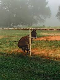 Donkey On A Fence Funny Animal Pictures Funny Animal Quotes Bones Funny
