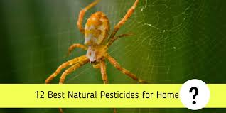 12 best natural pesticides for home a