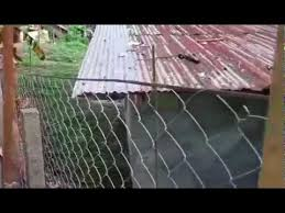 Philippines Construction Cyclone Chain Link Fencing In The Philippines Surigao City Youtube
