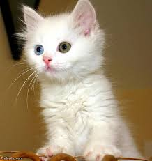 beautiful cute kittens photos for