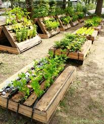 raised garden beds made out of pallets