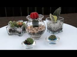 succulents in glass containers