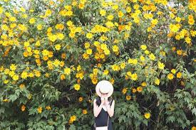 "Image result for hoa da quy dalat"""
