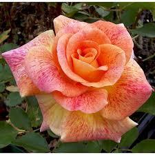 rosier michel serrault vente rosier