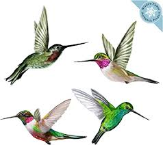 Amazon Com Anti Collision Window Clings Decals To Prevent Bird Strikes On Window Glass Set Of 4 Hummingbird Window Clings Home Kitchen