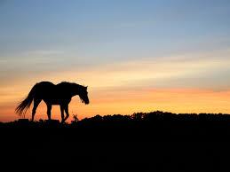 صور حصان رمزيات و خلفيات حصان بجودة Hd خيول عربية سوبر كايرو