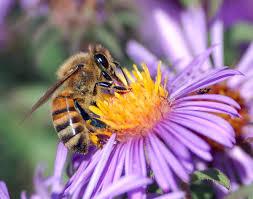 Hmyz – Wikipedie