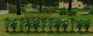 the sims 3 gardening guide seed plant list
