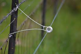Electric Fencing Helps Keep Cattle In Brian Cumming Agriculture Consultants