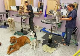 how much does dog grooming cost