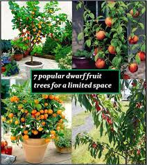 dwarf or miniature fruit trees