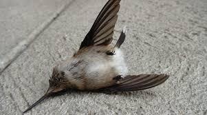 No es solo la muerte de un colibrí – Argonméxico
