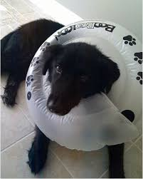 dog cone alternative homemade daily