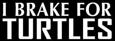 I Brake For Turtles Sticker Heart Decal Vinyl Bumper Decor Car Graphic Wall Ebay