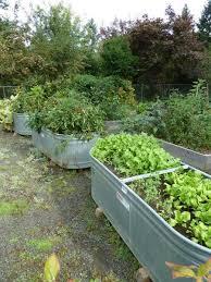 16 vegetable gardening nc state