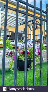 Vertical Frame Black Metal Fence With Potted Colorful Flowers Against Blurry Homes And Blue Sky Stock Photo Alamy