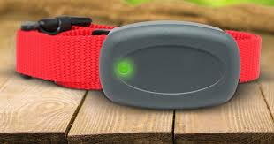 Rechargeable Collars Electric Dog Fence Colorado