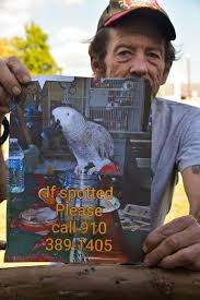Retired Marine offers reward for lost parrot - News - The Daily News -  Jacksonville, NC