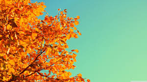 vine fall wallpapers top free